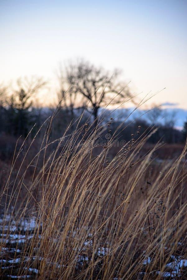 Nahaufnahme des Graslandgrases verbiegend in Wind bei Sonnenuntergang im Winter stockbilder