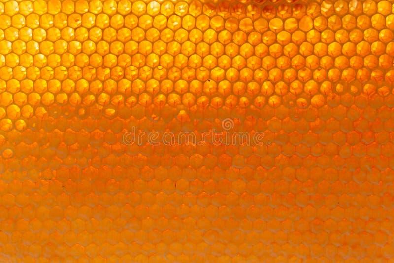 Nahaufnahme des Honigbienen-Zellhintergrundes lizenzfreie stockbilder