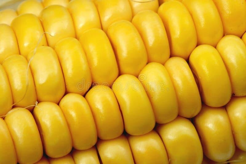 Nahaufnahme des indischen Mais lizenzfreies stockfoto