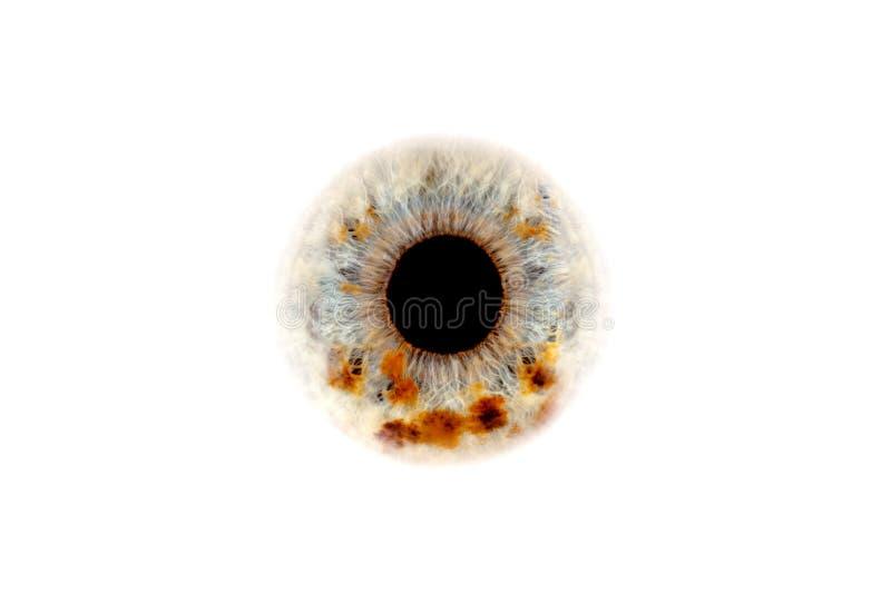 Nahaufnahme des menschlichen Auges lizenzfreie stockfotos