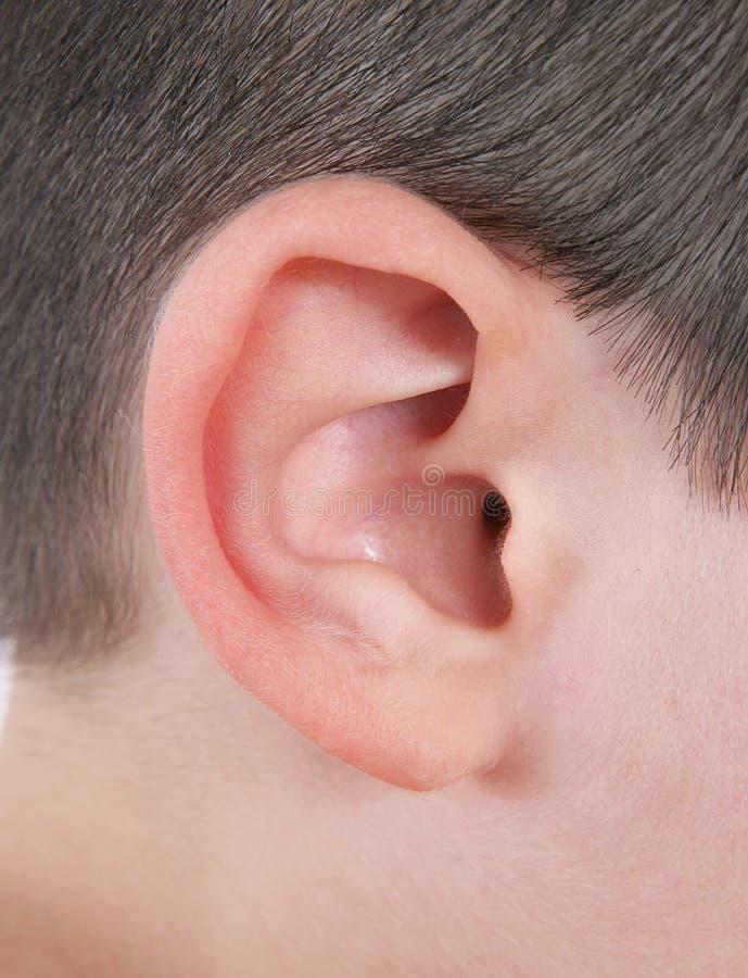 Nahaufnahme des menschlichen Ohrs stockfotos