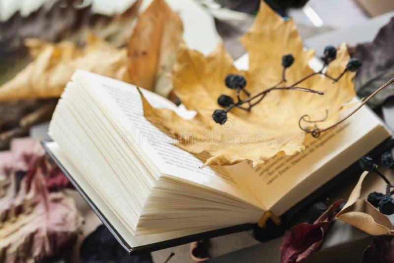 Nahaufnahme des offenen Buches, bedeckt mit trockenen Herbstahornblättern, sonniger Falltag, moderner Hintergrund Beschneidungspf lizenzfreies stockbild