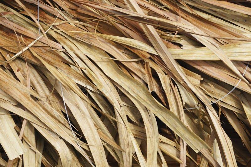 Nahaufnahme des Palmenstrohdachs mit Überschneidungshorizontaler Hintergrundbeschaffenheit der wedel lizenzfreie stockbilder