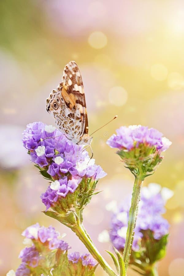 Nahaufnahme des schönen Schmetterlinges oder mit den geschlossenen Flügeln, die Blatthonig essen stockfotografie