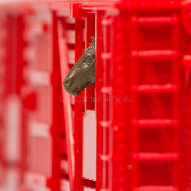 Nahaufnahme des Spielzeugviehbestandschienenfahrzeugs mit dem Pferdekopf, der heraus Schienenfahrzeugfenster späht lizenzfreie stockbilder