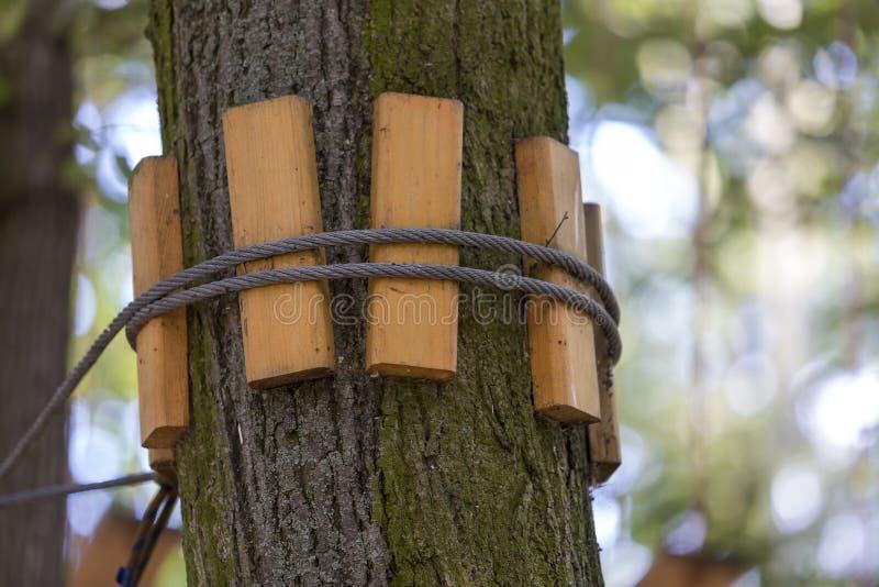 Nahaufnahme des starken festen geknoteten Seils der Kabelweise band am starken großen Baumstamm mit schützenden Planken auf helle lizenzfreies stockfoto