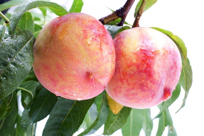 Nahaufnahme des vollkommenen Pfirsiches stockbilder