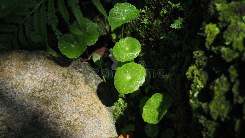 Nahaufnahme des Wassers auf den Blättern mit warmem gelbem Sonnenlicht und über werfendem Schatten der umgebenden Bäume lizenzfreies stockfoto