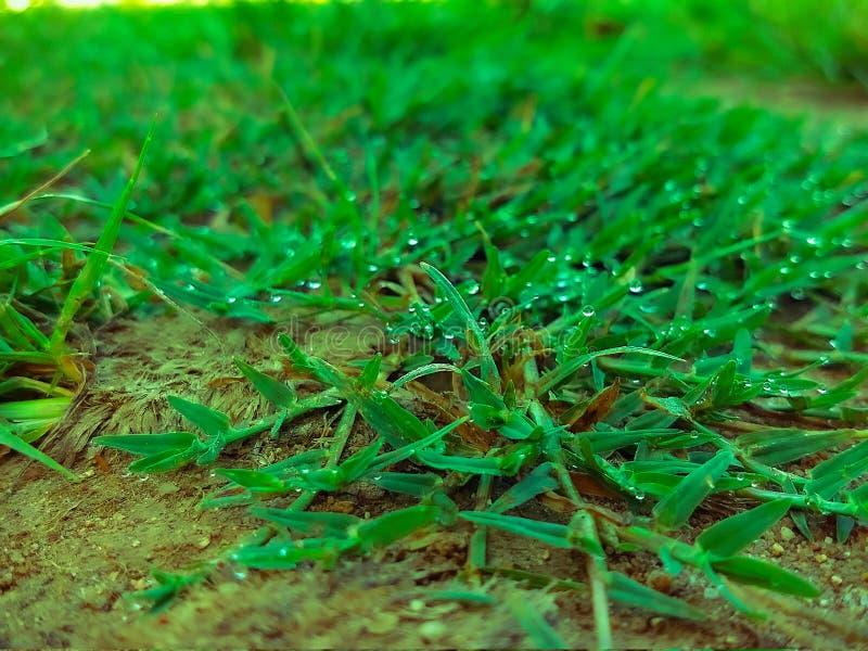 Nahaufnahme des Wassertröpfchens auf grünem Gras im Boden stockbilder