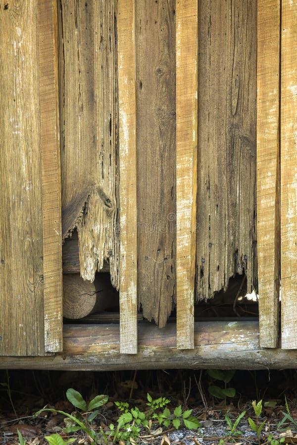Nahaufnahme des Zypressenabstellgleises auf alter Kabine in Kissimmee, Florida stockfotos