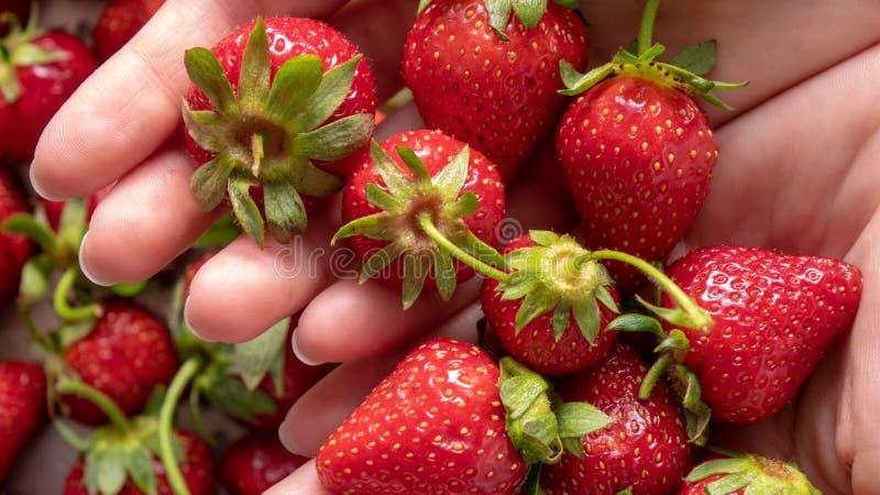 Nahaufnahme in einem Frau ` s übergibt saftige reife Erdbeere Flache Lage lizenzfreies stockbild