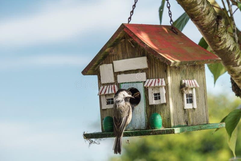 Download Nahaufnahme Einer Blauen Meise An Einem Vogelhaus Stockfoto - Bild von frech, feder: 96929952