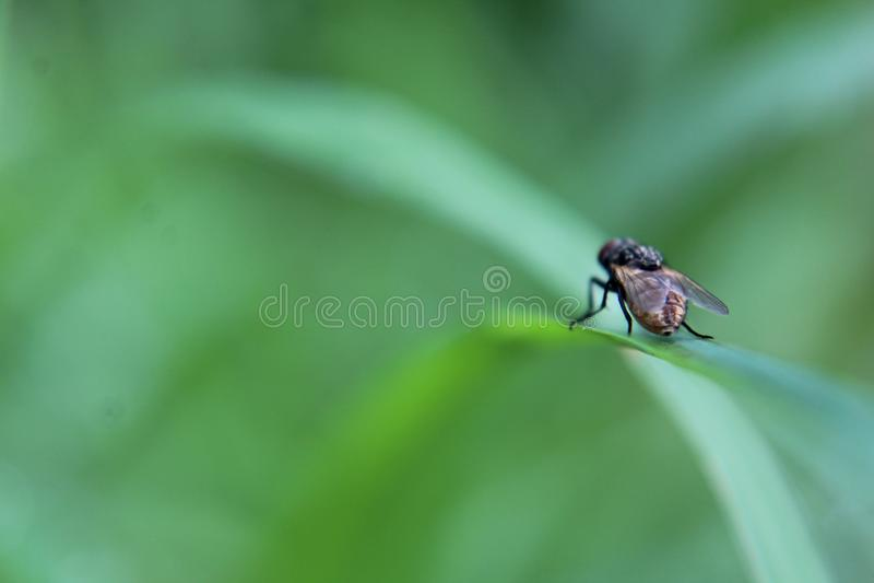 Nahaufnahme einer Fliege auf einem grünen Blatt lizenzfreies stockfoto