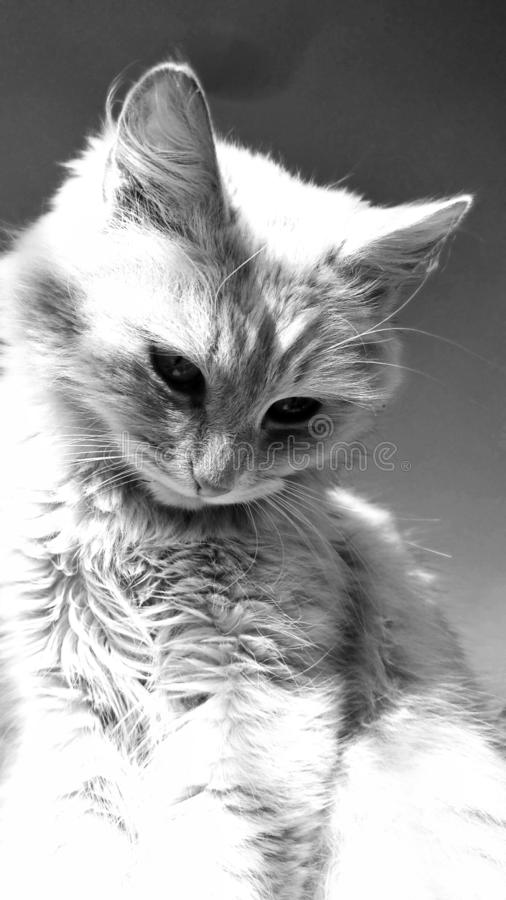 Nahaufnahme einer Katze lizenzfreie stockfotos