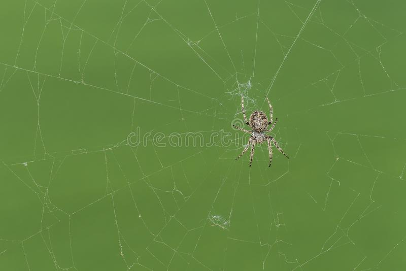 Nahaufnahme einer Kreuzspinne in seinem Spinnennetz stockfotos