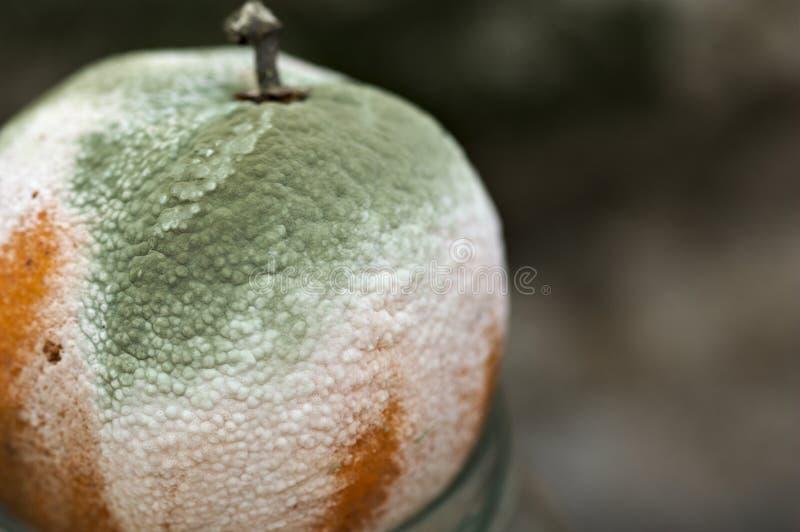Nahaufnahme einer Orange verdorben durch Form lizenzfreie stockfotografie