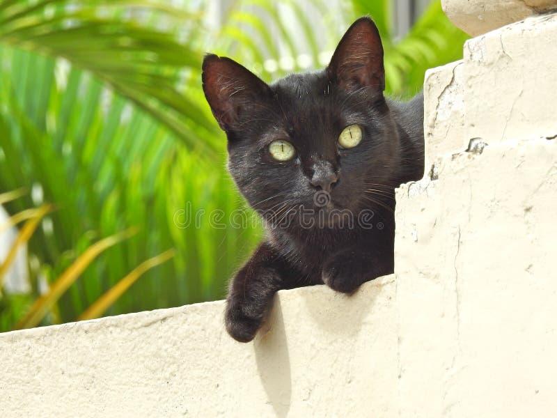 Nahaufnahme einer schwarzen Straßenkatzenstellung auf einer Wand, beleuchtet durch die Sommersonne stockfotografie