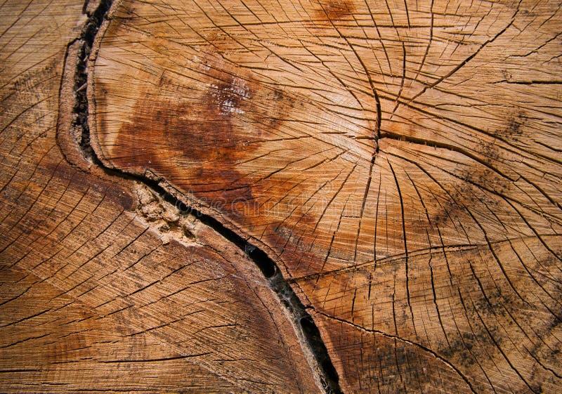 Nahaufnahme eines Baums mit Sprüngen und Jahresringen lizenzfreie stockbilder