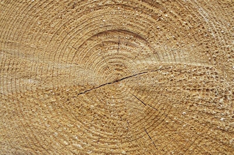 Nahaufnahme eines Baumschnittes lizenzfreie stockfotos
