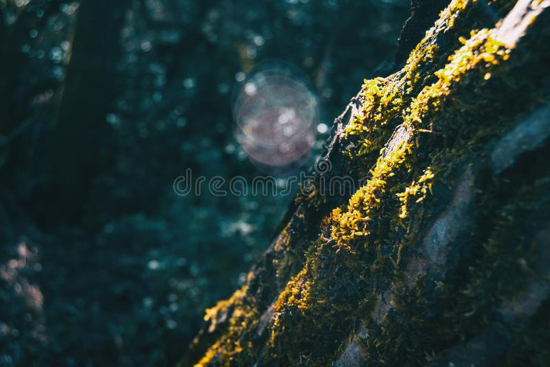 Nahaufnahme eines Baumstammes bedeckt durch Moos lizenzfreie stockbilder