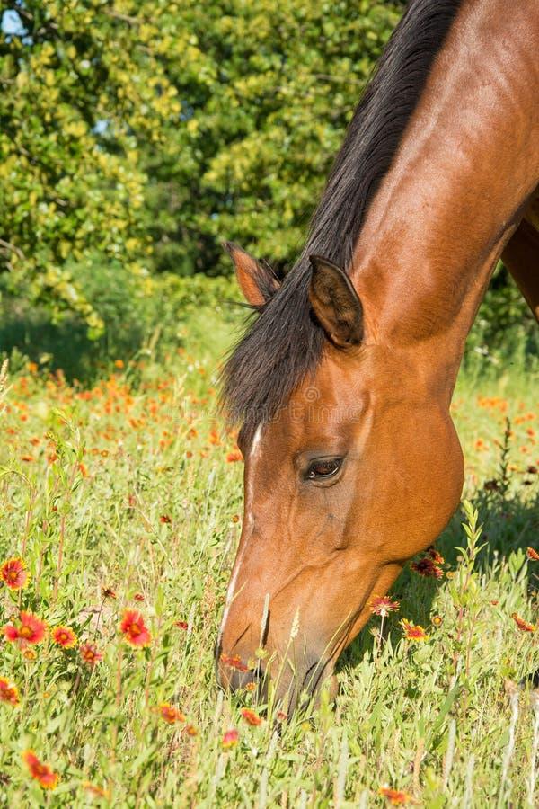 Nahaufnahme eines Braune ` s Kopfes mit roten wilden Blumen lizenzfreies stockbild