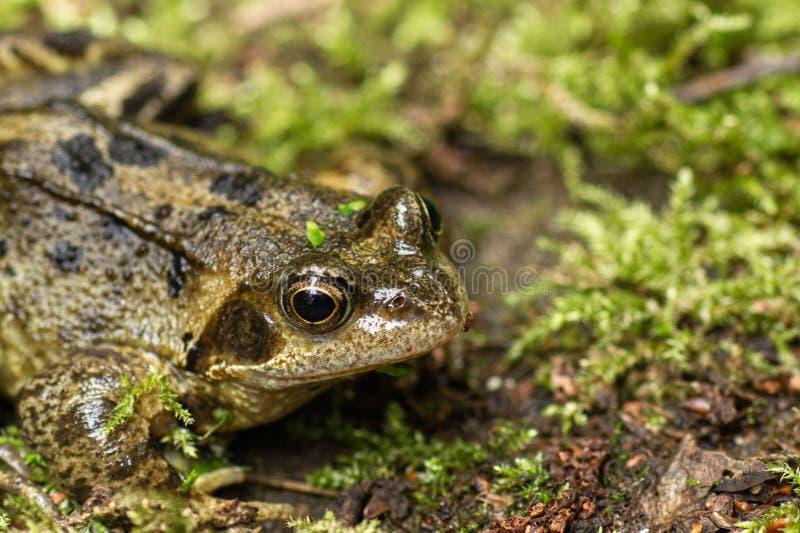 Nahaufnahme eines Frosches lizenzfreies stockfoto