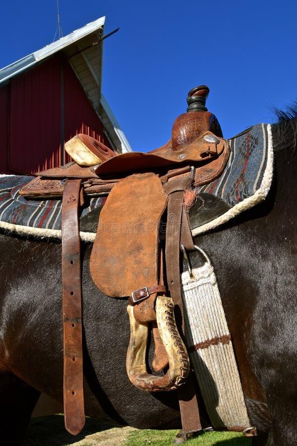 Nahaufnahme eines gesattelten Pferds stockbilder