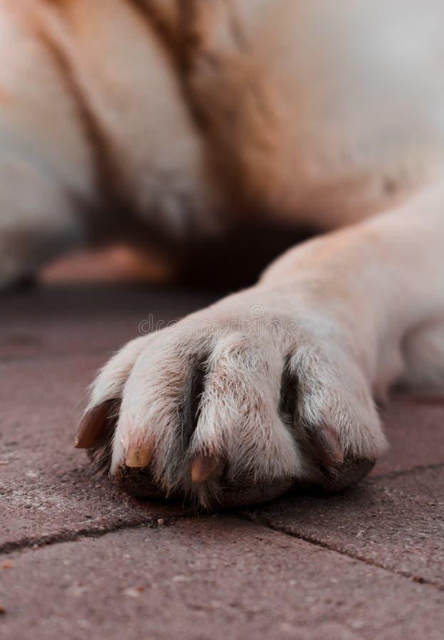 Nahaufnahme eines Hundebeines lizenzfreies stockbild