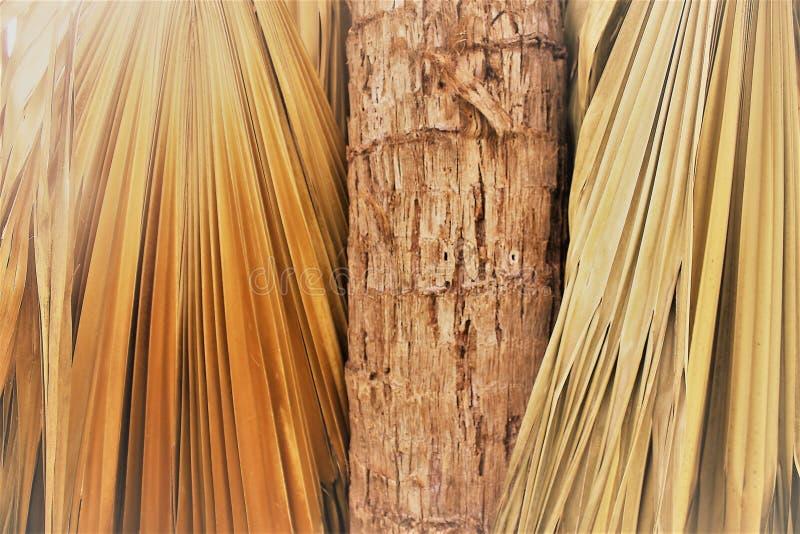 Nahaufnahme eines Palmestammes und -Palmwedel stockfotografie