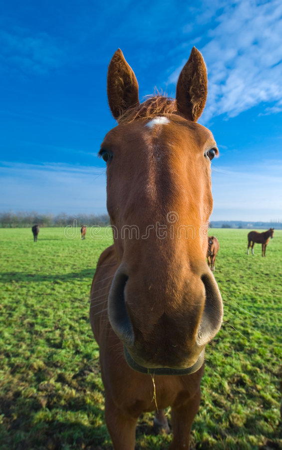 Nahaufnahme eines Pferds lizenzfreie stockfotografie