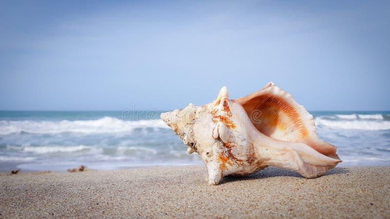 Nahaufnahme eines Seeoberteils, das auf einem Ufer liegt lizenzfreie stockbilder
