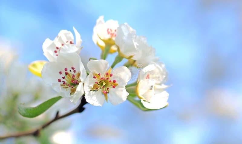 Nahaufnahme-Foto von den weißen Petaled Blumen rot und von gelber Schande lizenzfreies stockbild