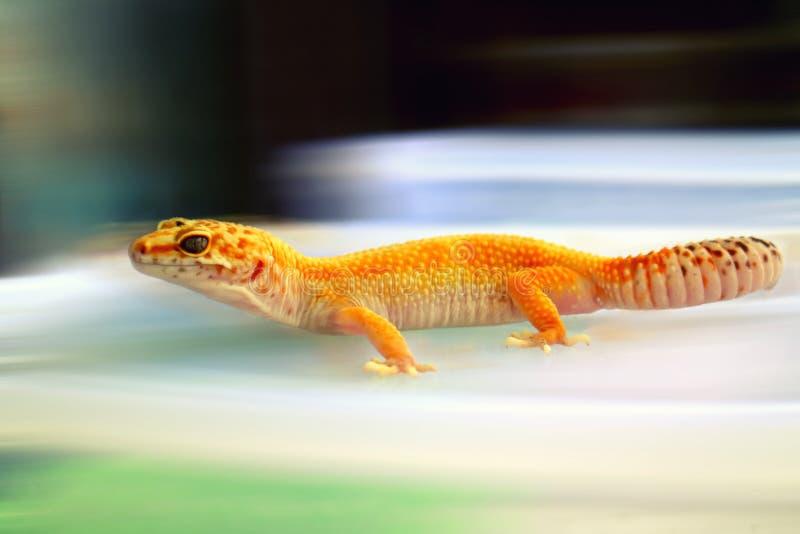 Nahaufnahme-gelber Gecko-Einschleichenunschärfe-Hintergrund lizenzfreies stockfoto