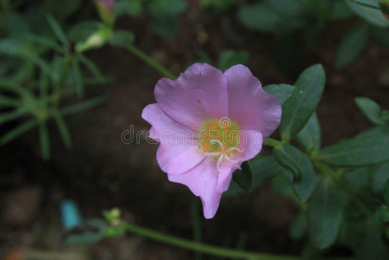 Nahaufnahme geschossen von der Blume auf Morgen stockbild