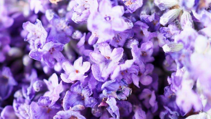 Nahaufnahme oder Makrobilder von Japan-Lavendel lizenzfreie stockbilder