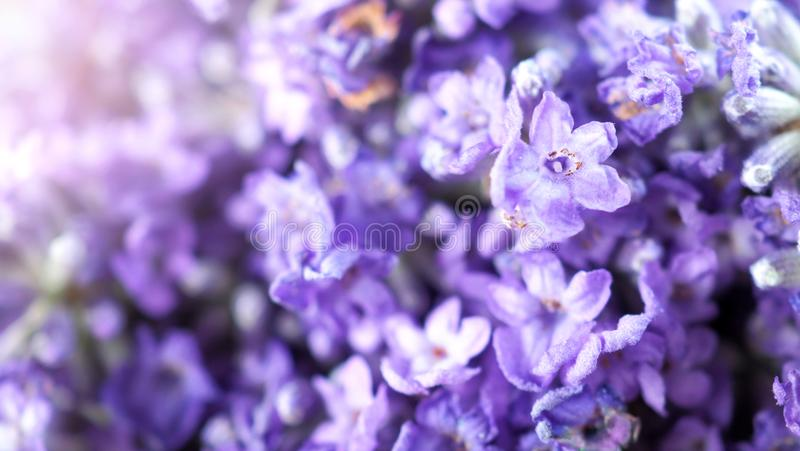 Nahaufnahme oder Makrobilder von Japan-Lavendel lizenzfreies stockbild