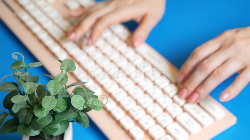 Nahaufnahme stilvolle gr??ende Videokarte weibliche H?nde schreiben auf einer rosa Tastatur, nahe bei einer Blume Auf einem Blau stockfotos