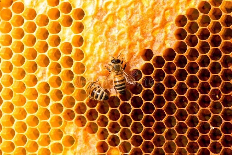 Nahaufnahme von Bienen auf Bienenwabe im Bienenhaus lizenzfreie stockfotografie
