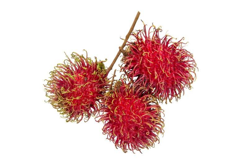 Nahaufnahme von den hellen roten Rambutanfrüchten lokalisiert auf weißem Hintergrund lizenzfreies stockfoto