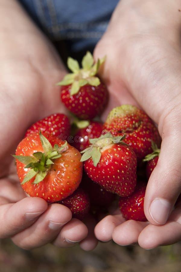 Nahaufnahme von Erdbeeren stockfotografie