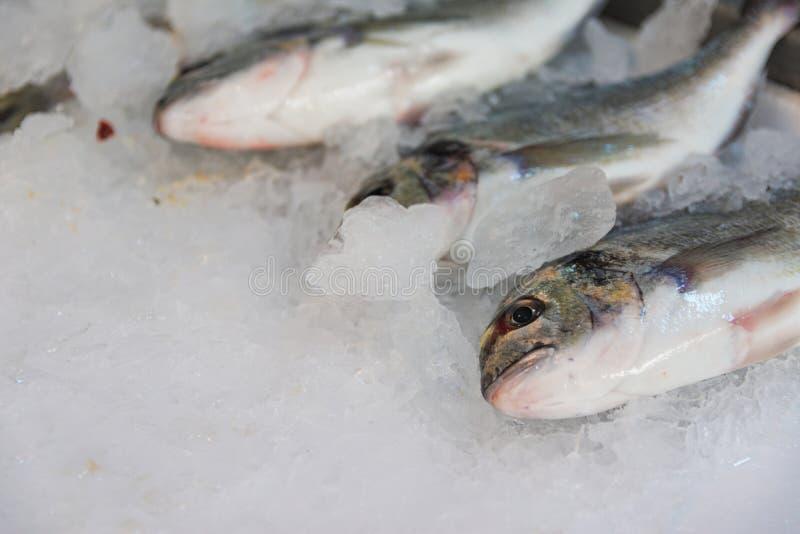 Nahaufnahme von frisch gefangenen Vergoldung-köpfigen Seebrassen oder von Sparus Aurata auf dem Eis ausgerichtet für Verkauf im g stockbilder