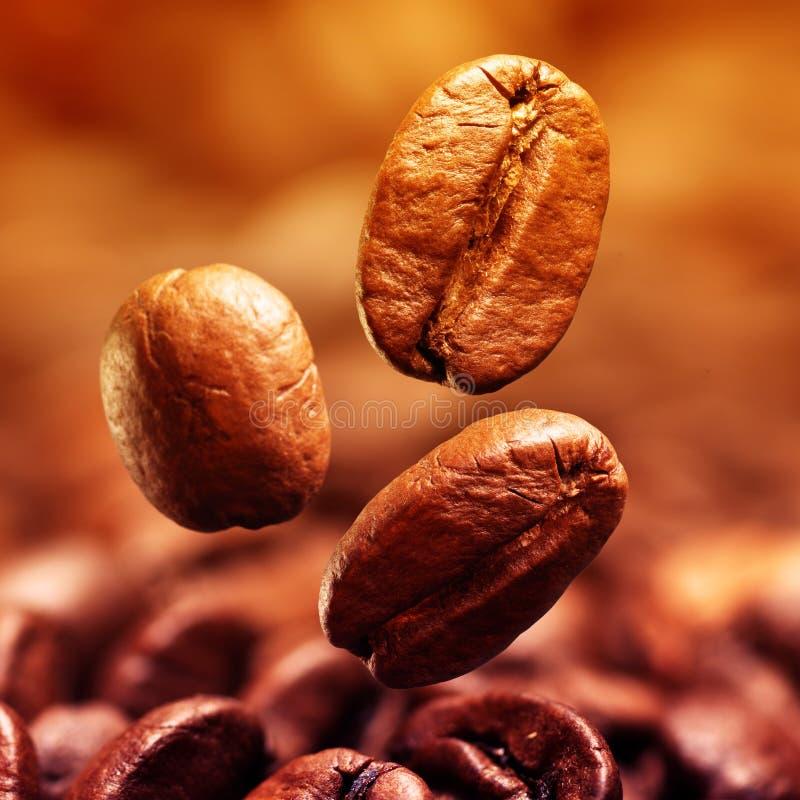 Nahaufnahme von Kaffeebohnen stockbild
