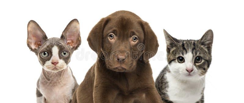 Nahaufnahme von Katzen und von Hund stockfotos