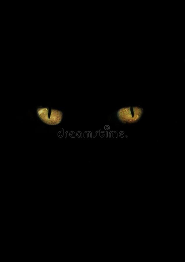 Nahaufnahme von Katzenaugen lizenzfreies stockfoto