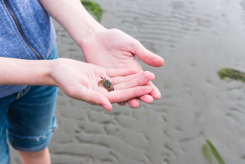 Nahaufnahme von Mädchen ` s übergibt das Halten der kleinen grünen Krabbe bei auf Strand bei Ebbe stehen stockbild
