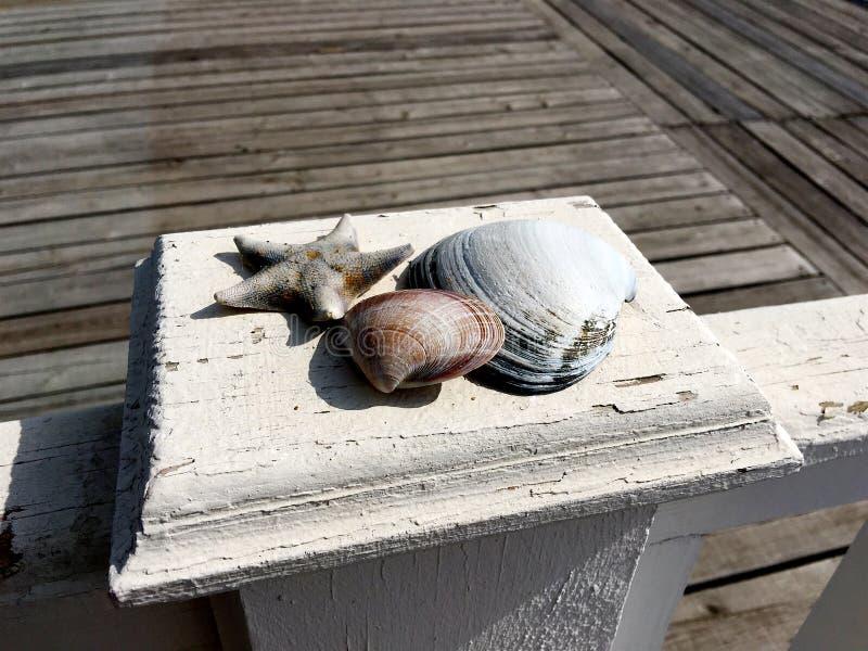 Nahaufnahme von Muscheln und eine trockene Starfishlüge auf einer hölzernen weißen Hecke stockfoto