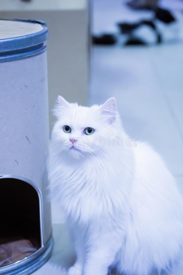 Nahaufnahme von netten Katzen stockbild