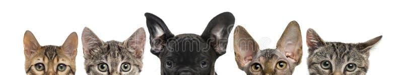 Nahaufnahme von oberen Köpfen von Katzen und von Hund lizenzfreie stockbilder