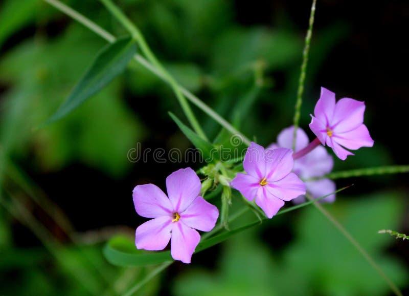 Nahaufnahme von purpurroten Blumen stockfoto