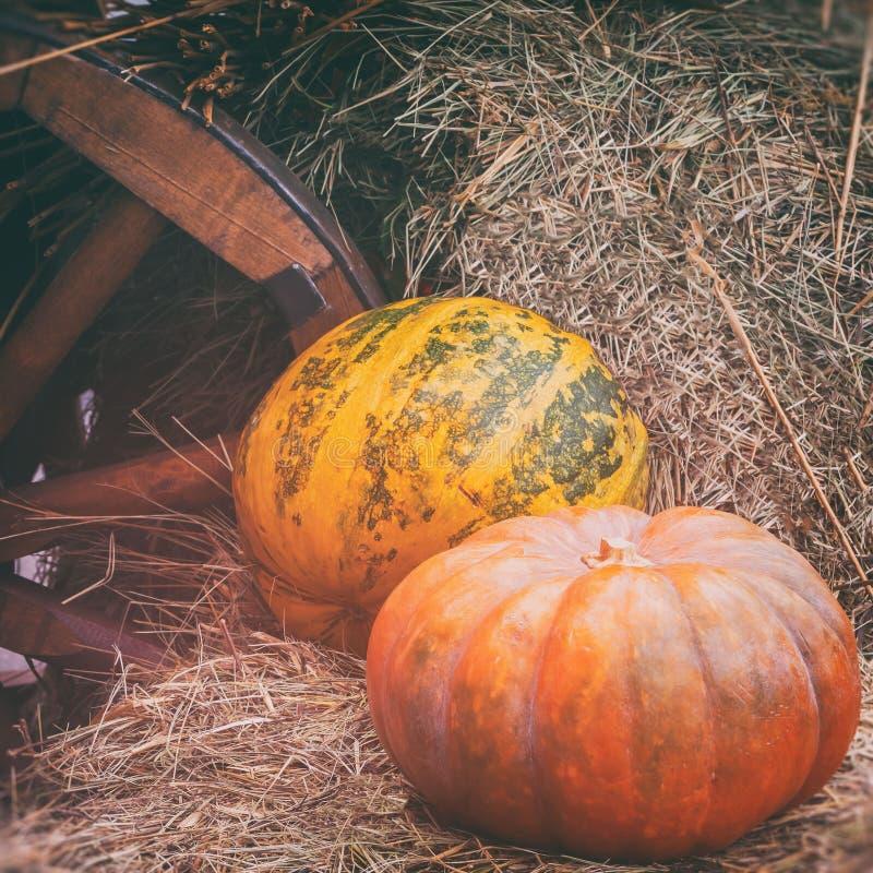 Nahaufnahme von reifen großen gewellten Kürbisen auf Stroh nahe hölzernem Rad des Warenkorbes, Weinlesehalbtone Rustikaler Weinle lizenzfreie stockfotografie
